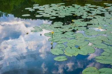 Hopfen am See | © Ruperta M. Steinwender